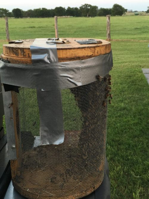 Bees Packed Up and Ready to Move