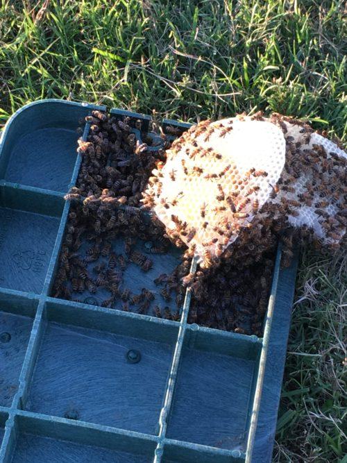 valve box lid, comb, bees