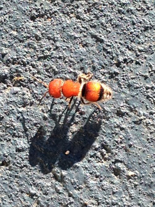 bright-orange-bug