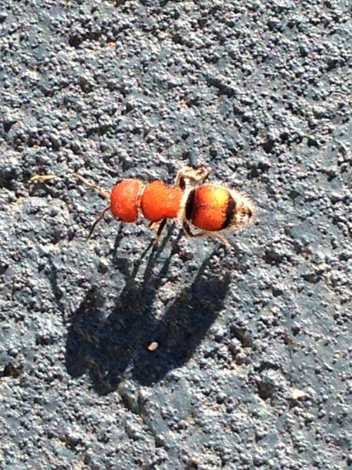 bright-orange-bug