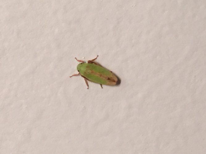 cute-green-moth