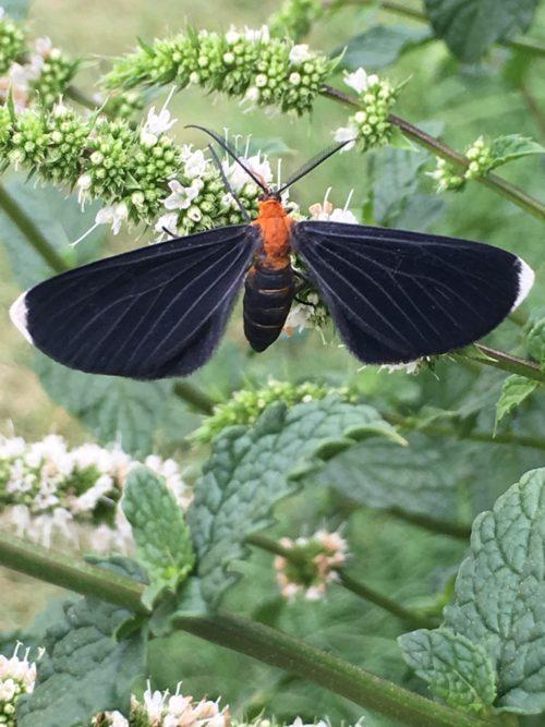 mystery-moth-1