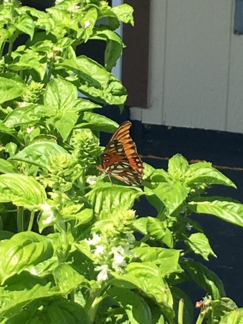 spotted-butterfly-1